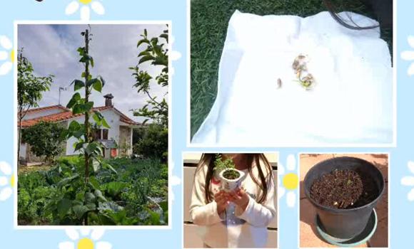 Our plants!!!!